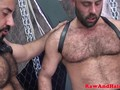 Hairy bear enjoys blowbang feast
